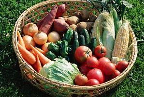 野菜加工・卸売業